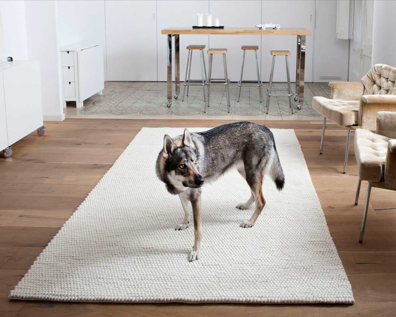 modern kitchen rugs dog grey white brown